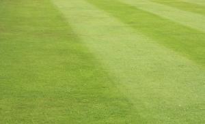 Hvordan får du den flotteste mest grønne græsplæne?